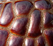 La textura del cuero Cuero de Brown Fotos de archivo