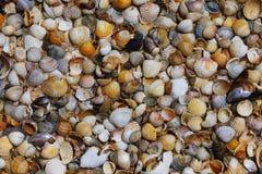La textura del diverso mar descasca la mentira en la arena Foto de archivo