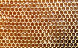 La textura del fondo y el modelo de una sección del panal de la cera de una colmena de la abeja llenaron de la miel de oro en una Imagenes de archivo