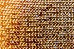 La textura del fondo y el modelo de una sección del panal de la cera de una colmena de la abeja llenaron de la miel de oro en una Imagen de archivo