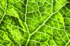 La textura del manchado verde claro de la hoja Fotos de archivo