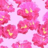 La textura del paeonia Imagen de archivo libre de regalías