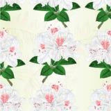 La textura inconsútil florece el ejemplo blanco del vector del vintage del arbusto de la montaña de la ramita de los rododendros  Fotografía de archivo libre de regalías