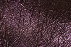 La textura macra de la piel de pintado hace la palma Fotos de archivo