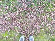 La textura natural de hojas el caída y se alza de una persona Fotos de archivo libres de regalías