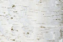 La textura o el fondo de la corteza de abedul Fotografía de archivo