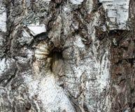 La textura original del tronco de árbol Imagen de archivo libre de regalías