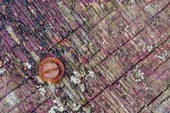 La textura rica de la madera resistida, con las grietas y el dolor de la peladura fotografía de archivo libre de regalías