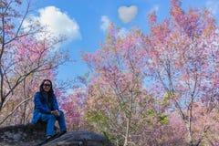 La textura superficial de Gratoxylum, formosum, Guttiferae, colorido dulce de la flor de Tailandia Sakura, flor rosada del corazó fotos de archivo libres de regalías