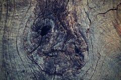 La texture d'un vieil arbre Images libres de droits
