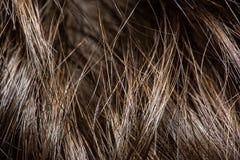 La texture de la fin de cheveux  macrophotography photo stock