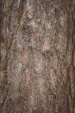 La texture de l'écorce d'un pin Photographie stock libre de droits