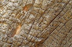 La texture de l'arbre brûlé Images libres de droits
