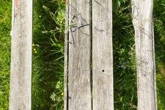 La texture de l'arbre sur l'herbe Photos libres de droits