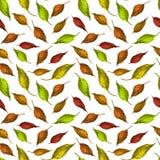 La texture de mod?le laisse ? papier peint de fond le vert color? de d?coration de textile de conception d'art rouge jaune illustration stock