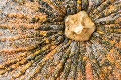 La texture de potiron, se ferment vers le haut du potiron Images stock