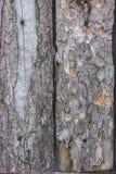 La texture de sèchent l'écorce sur des conseils avec des clous Arbre de pin Images stock