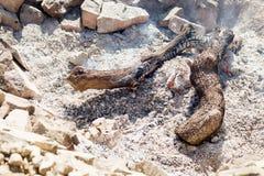 La texture des charbons de combustion lente dans le puits Image stock