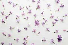 La texture des fleurs du lilas sur un fond blanc photo libre de droits