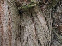 La texture du bois Photos stock