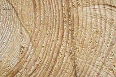 La texture du bois coupée à l'année sonne Photos stock