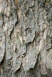 La texture du bois pour le fond Photos libres de droits