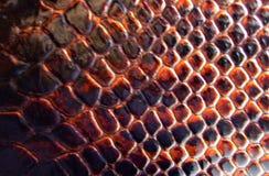 La texture du cuir Image libre de droits