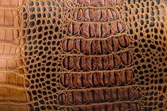La texture du noir de brun de peau Un petanova d'imitation de Crocodile-peau Photos libres de droits