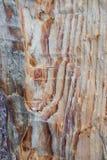 La texture du pin, hache de bûcheron, beau fond naturel de vandale photographie stock libre de droits