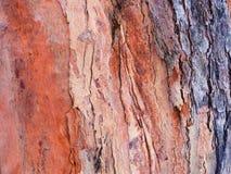 Écorce d'arbre Photo stock