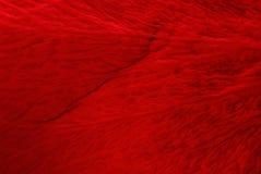 La texture du rouge de pétales a monté Image stock