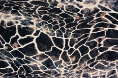 La texture du tissu d'impression a barré le zèbre et le léopard Photo stock