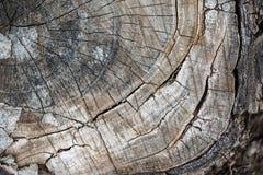 La texture du tronçon d'arbre La vue à partir du dessus photos libres de droits