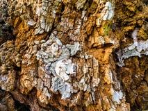 La texture du tronc d'un vieil arbre image stock