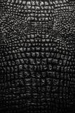 la texture métallique aiment le cuir de peau de crocodile photo libre de droits