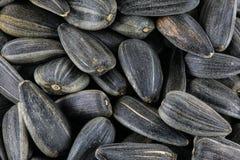 La texture ou le fond de ` de graines de tournesol Photographie stock