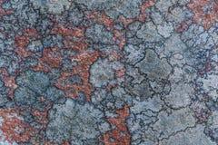 La texture ou le fond de la vieille surface en pierre couverte de lichen et de mousse images libres de droits