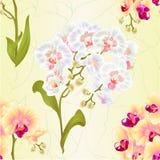 La texture sans couture s'embranche Phalaenopsis d'orchidée blanc et les fleurs et les plantes tropicales jaunes de feuilles refo Photos stock