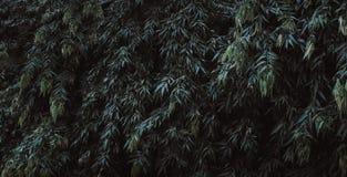 La texture verte de feuille, vert part pour le fond, vert laisse le wa photo stock