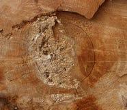 La texture a vu la coupe le vieil arbre Photo libre de droits