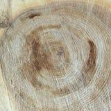 La texture a vu la coupe le vieil arbre Photographie stock libre de droits