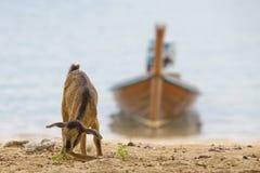 La Thaïlande Photo stock