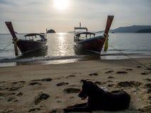 La Thaïlande - deux bateaux et un chien sur la plage image stock