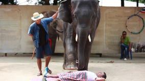 La Thaïlande, Koh Samui, le 9 février 2016 Représentation des éléphants sur l'exposition d'éléphant L'animal fait un massage au banque de vidéos
