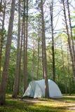 La tienda de campaña en bosque del árbol de pino sube al norte Foto de archivo