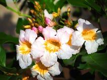 La tienda de delicatessen de la primavera comió las flores, flores blancas imagenes de archivo