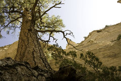 La tienda de Kasha-Katuwe del árbol oscila el monumento Imagen de archivo libre de regalías