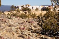 La tienda de Kasha-Katuwe oscila el monumento nacional, New México, los E.E.U.U. Fotos de archivo