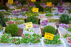 La tienda dentro de la gabarra flotante exhibe los houseplants para la venta en el mercado de la flor de Amsterdam, Países Bajos Imágenes de archivo libres de regalías
