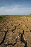 La tierra árida en el campo de arroz Fotografía de archivo libre de regalías